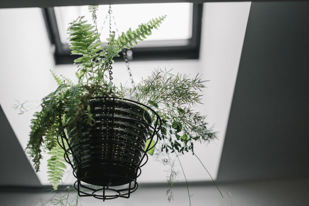 enzo_minsk_by_palasatka_11